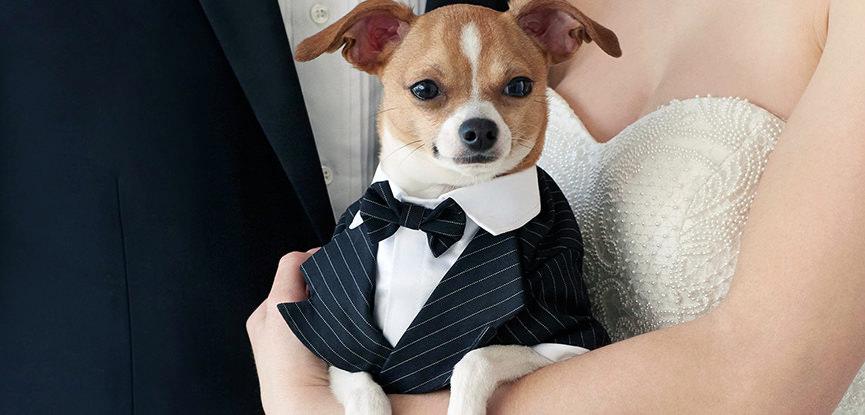 cachorro-entrega-aliancas-em-casamento-capa