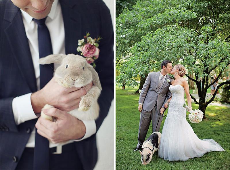 coelho-e-porquinho-de-estimacao-no-casamento