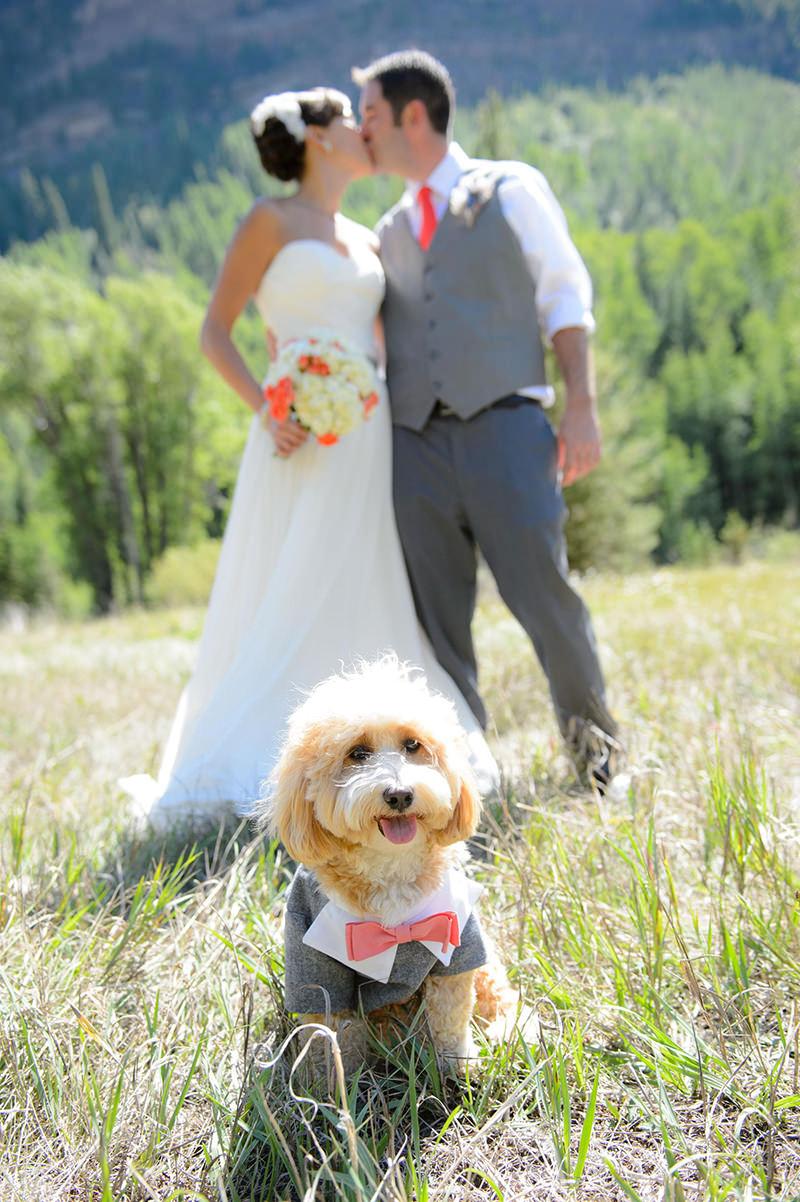 ensaio-pos-wedding-com-o-cachorro-de-terno