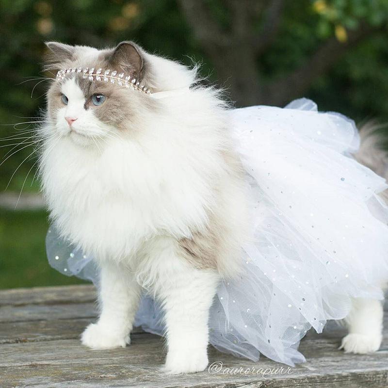 gata-vestida-de-noiva-para-ensaio-fotografico