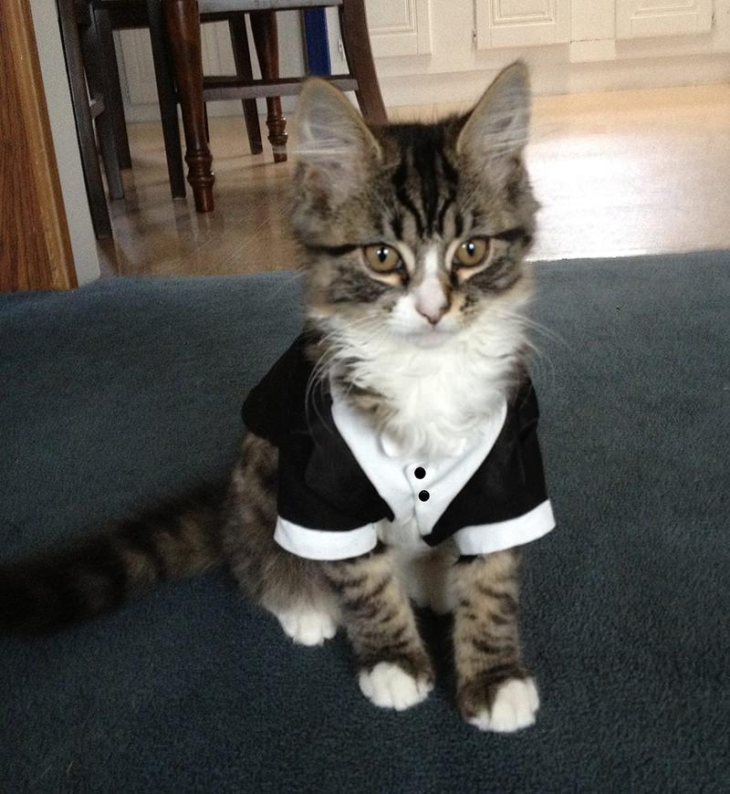 gato-de-terno-para-casamento