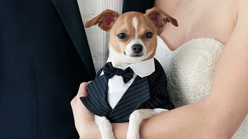 cachorro-entrega-aliancas-em-casamento