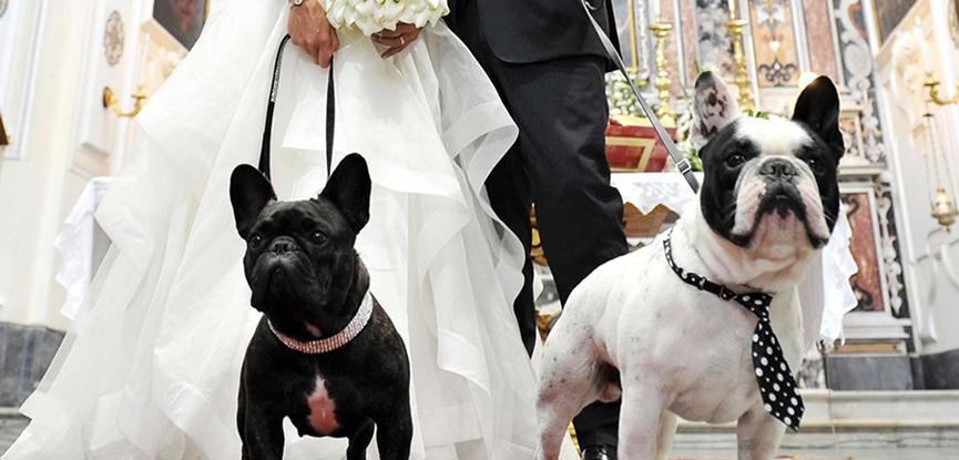 casamento-com-cachorro-seu-pet-fazendo-parte-do-casamento-capa