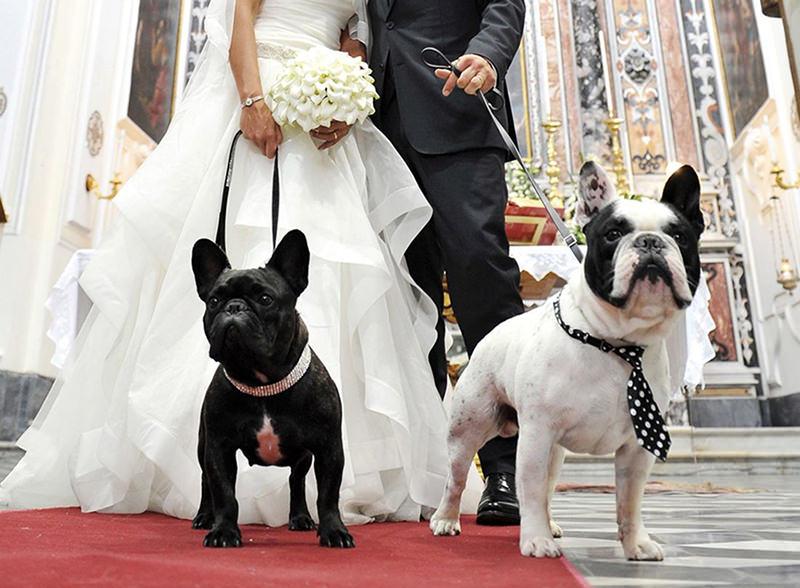 casamento-com-cachorro-seu-pet-fazendo-parte-do-casamento