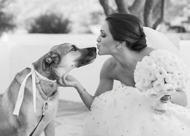 pet em casamento4