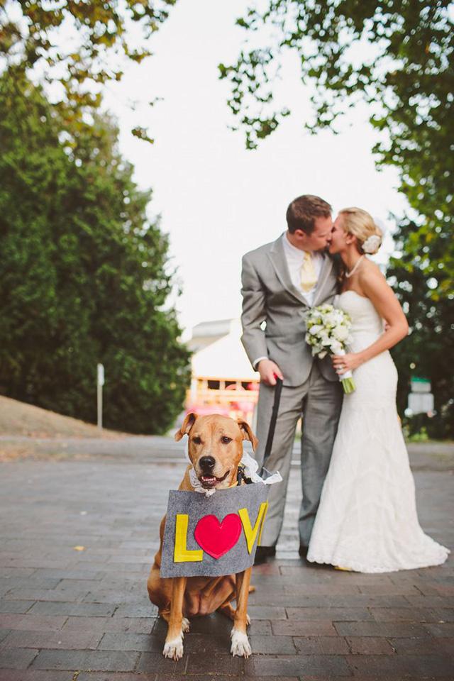 pet em casamento5