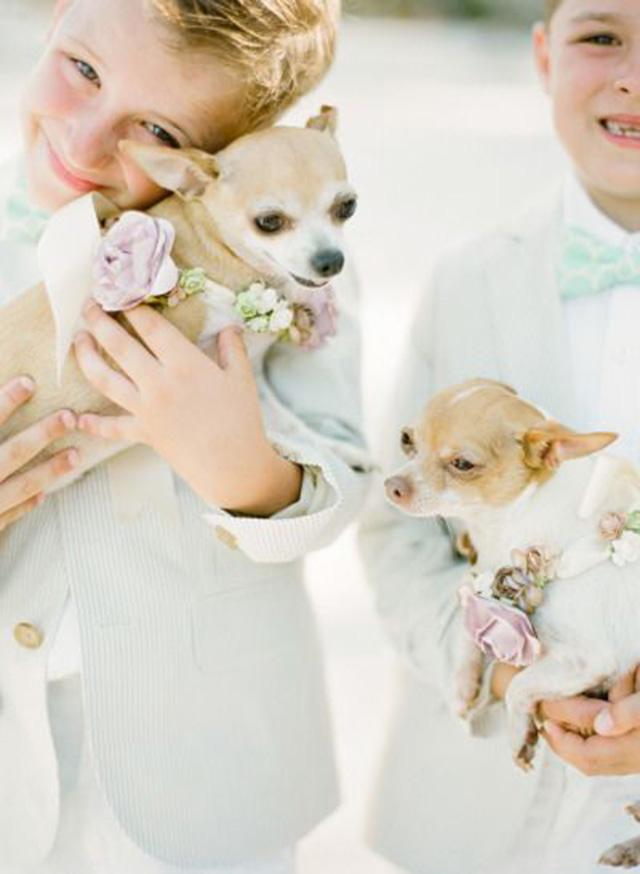 pet em casamento6