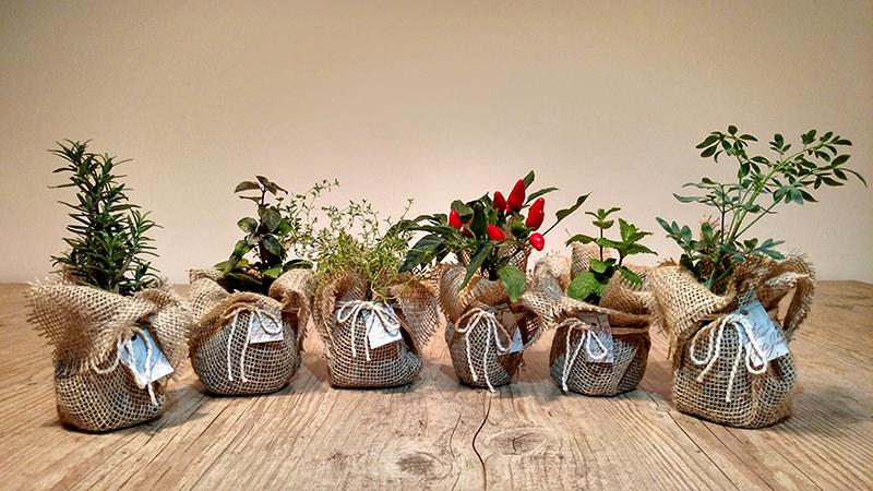 mudas-de-ervas-e-temperos-decorados-lembrancinha-cha-de-cozinha