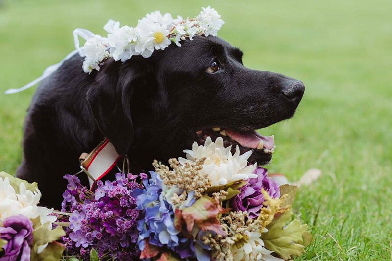 emocionante-casamento-kelly-e-james-e-seu-cachorro-charlie-em-fase-terminal