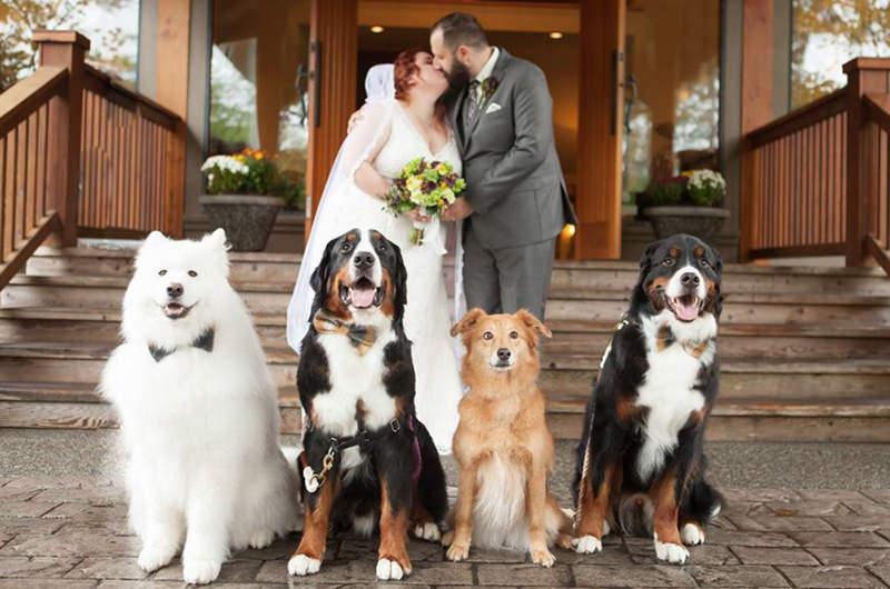 cachorros-no-ensaio-fotografico-dos-noivos