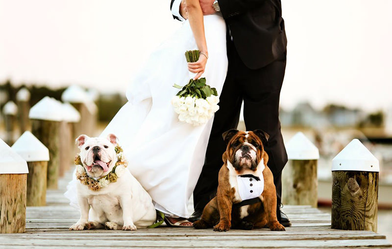 caes-participam-do-casamento-dos-tutores