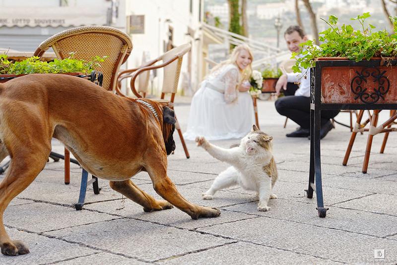 cao-e-gato-participando-do-casamento