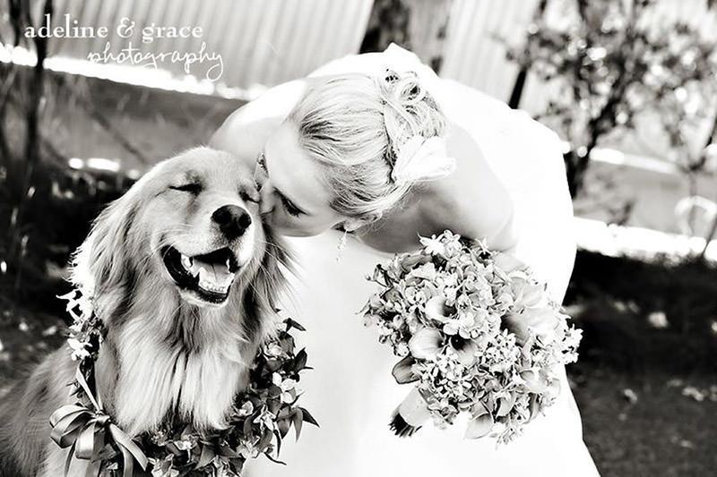 fotografia-cachorro-no-dia-do-casamento