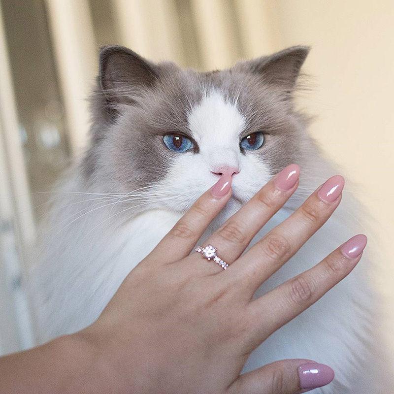 gata-de-estimacao-fotos-com-o-anel-de-noivado