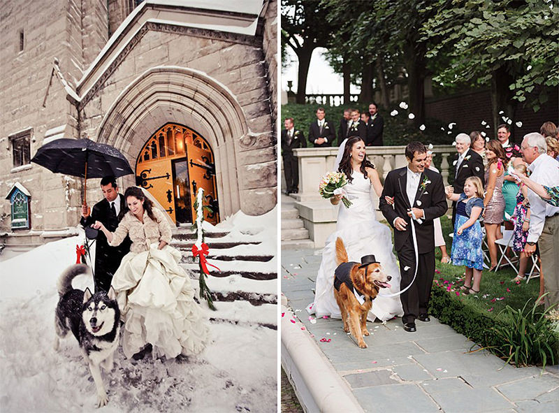 noivos-em-fotos-do-casamento-com-caes