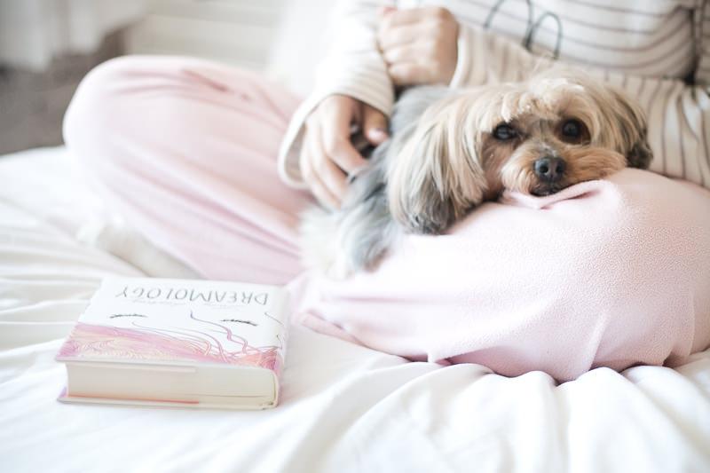 cachorro-animal-de-estimacao-carinho-na-vespera-do-casamento