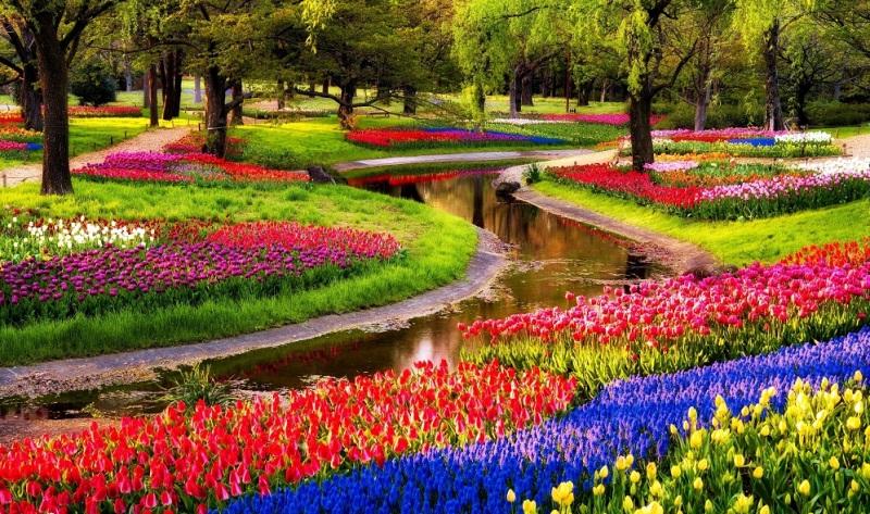 Maior-jardim-do-mundo-Keukenhof-Amsterda-Jardim-Holanda-pedido-de-casamento