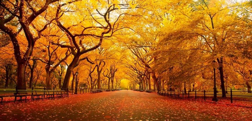 central-park-nova-york-pedido-de-casamento-no-outono-capa
