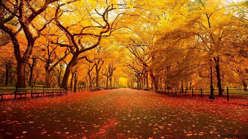 central-park-nova-york-pedido-de-casamento-no-outono