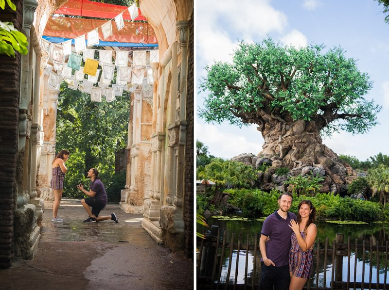 disney-animal-kingdom-pedido-de-casamento