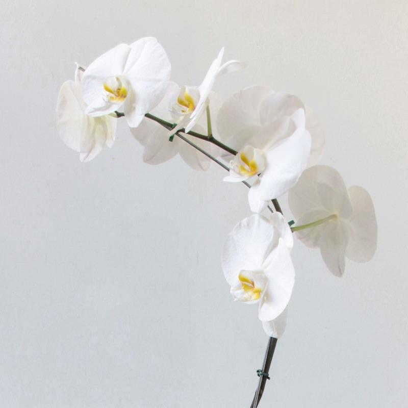 orquidea-branca-decoracao-de-casamento