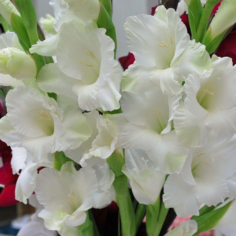 palma-branca-decoracao-de-casamento