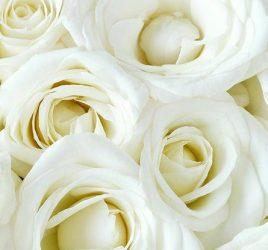 rosas-brancas-para-decoracao-do-casamento-capa