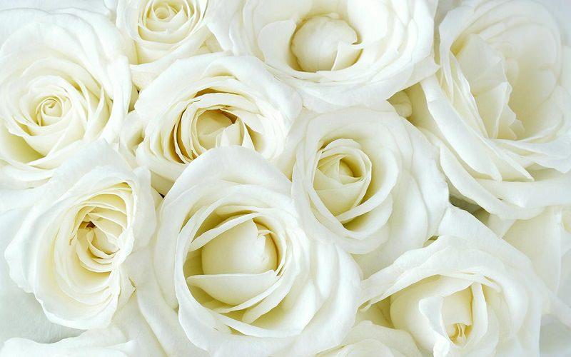 rosas-brancas-para-decoracao-do-casamento