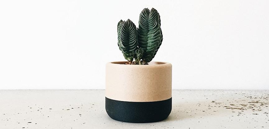 11-planta-em-vasinho-moderno-para-lembrancinha-de-festa-capa