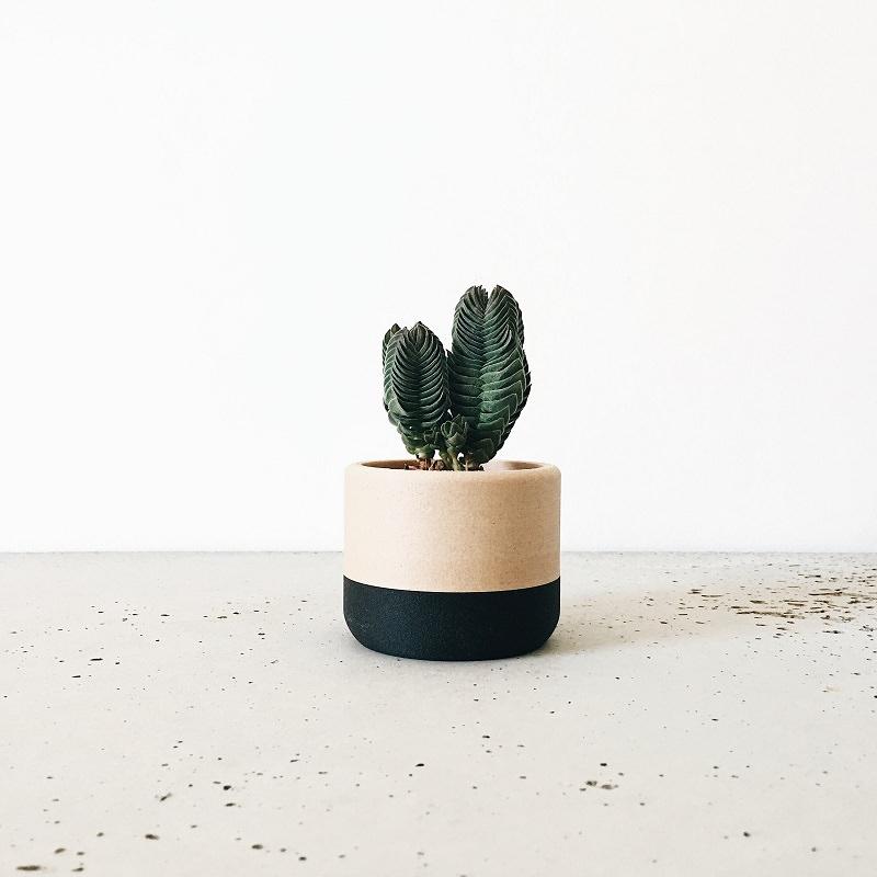 11-planta-em-vasinho-moderno-para-lembrancinha-de-festa